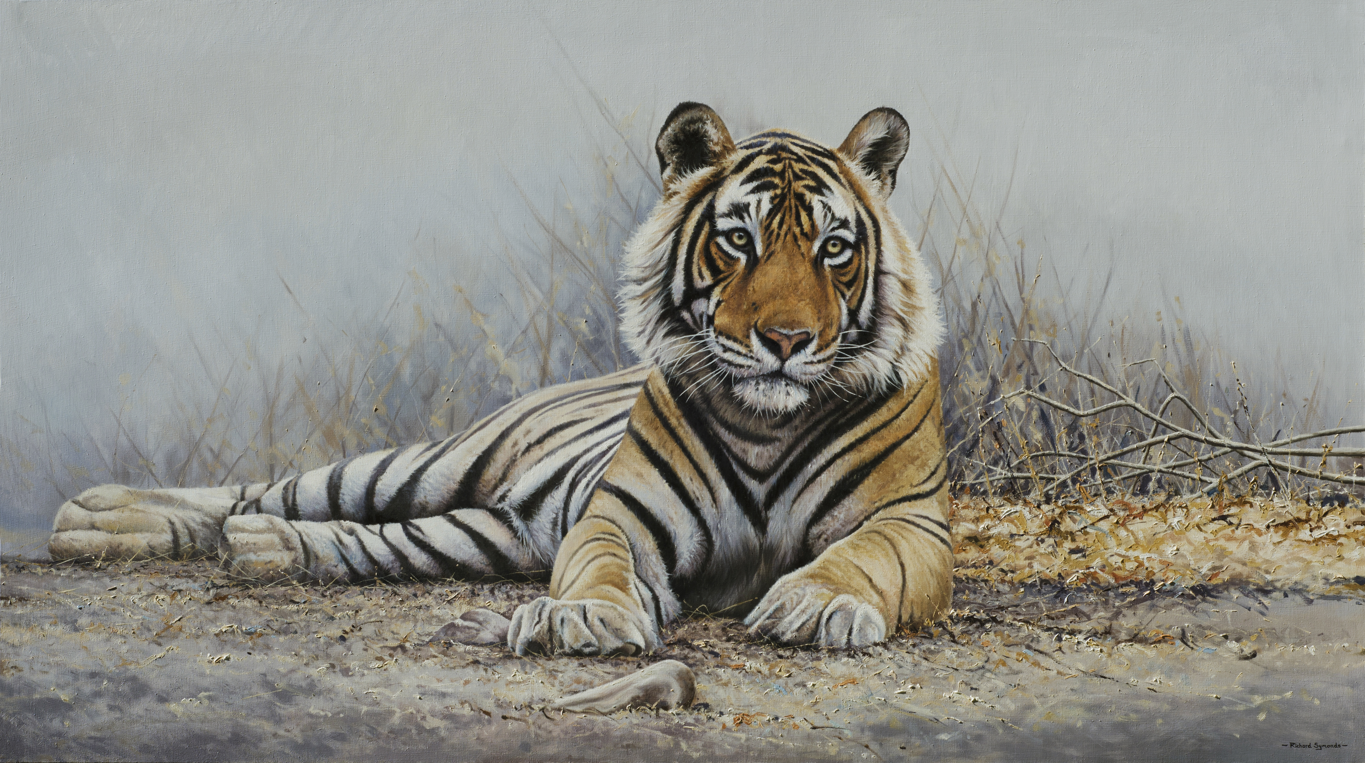 tiger of india