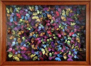 Daniel Byrne Liberty Chaos framed butterfly wall art for sale