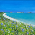 John Connolly Scilly Agapanthus